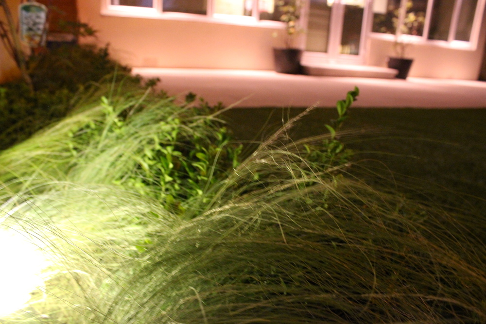 grasses and paving lights