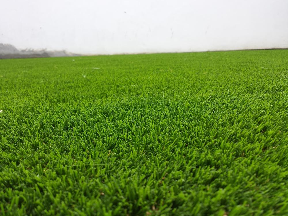 Garden lawn turf.jpg