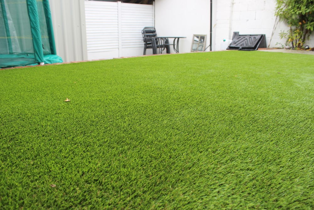 Turf lawn close up