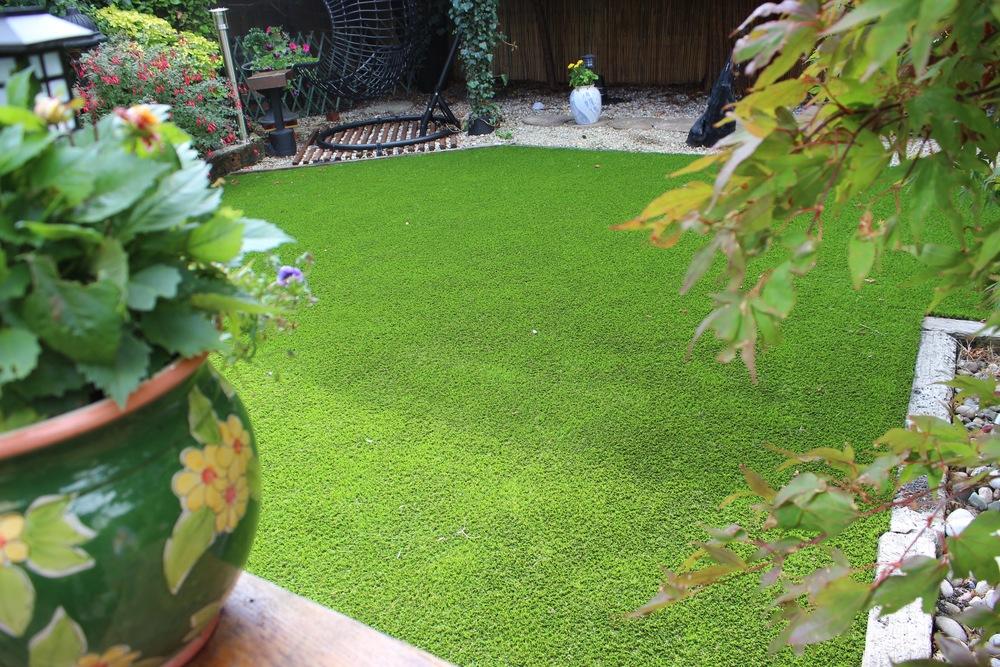 garden grass.jpg