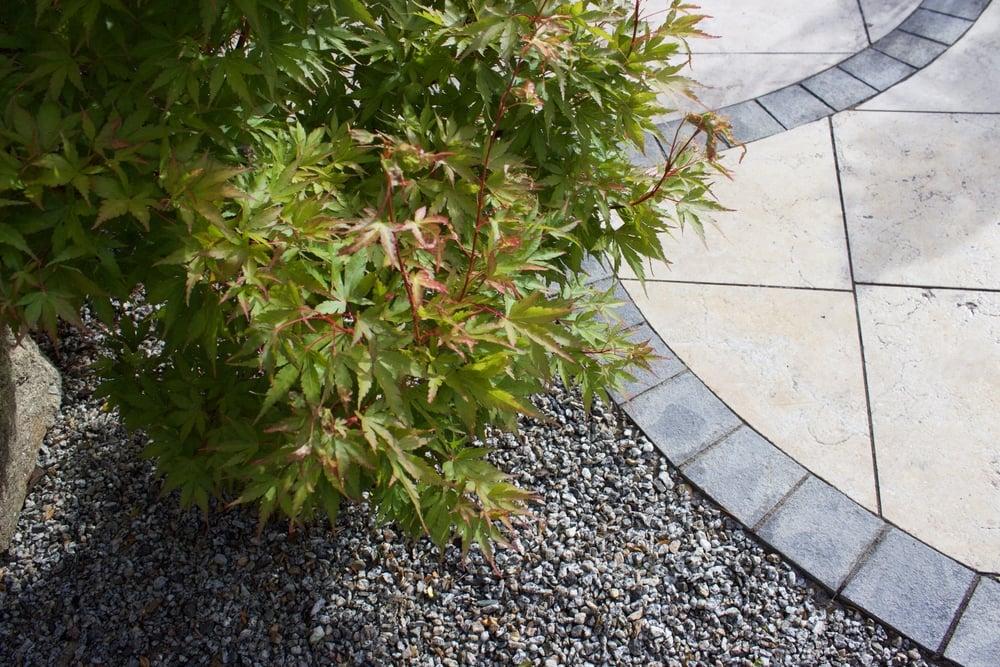 Maple Tree in Garden Design.jpg