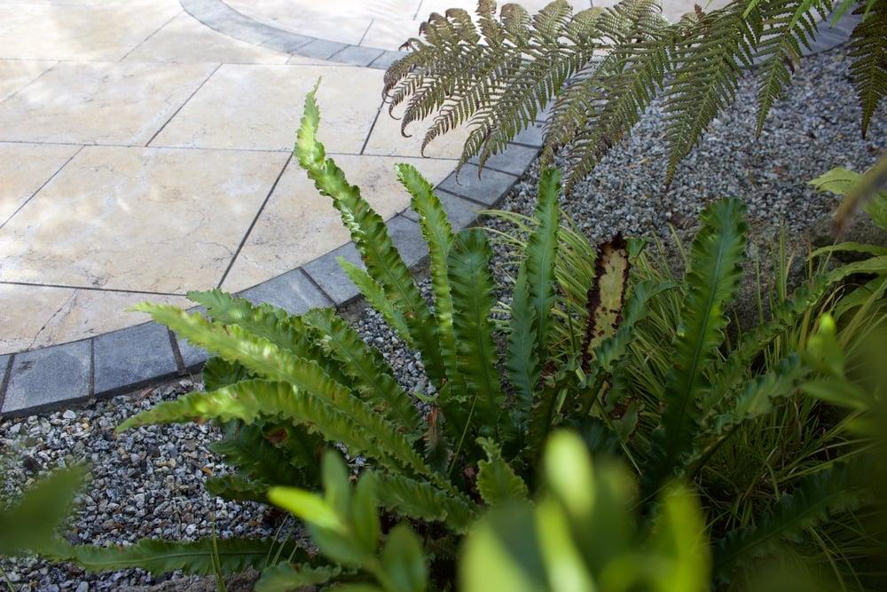 tree and ground ferns.jpg