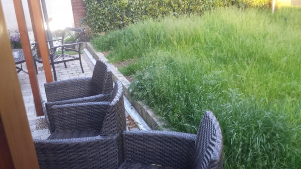 malahide garden lawn
