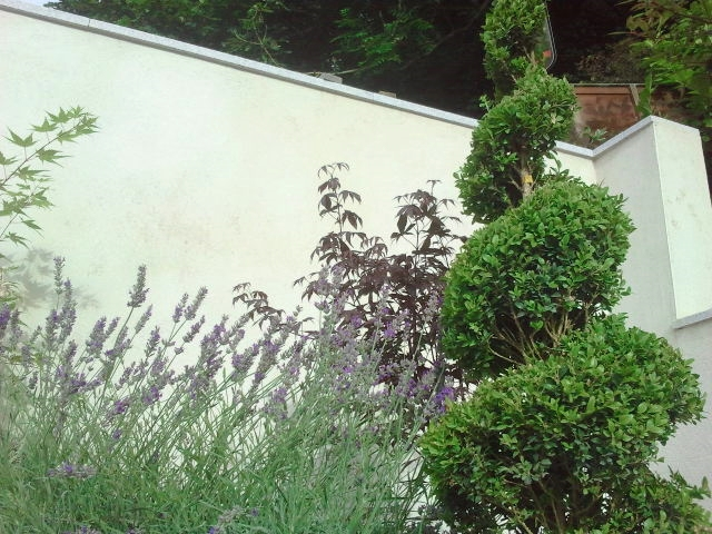 buxus spiral hedging