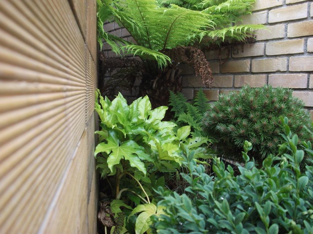 planting in corner of garden
