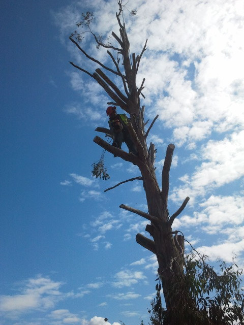 Garden maintenance tree felling