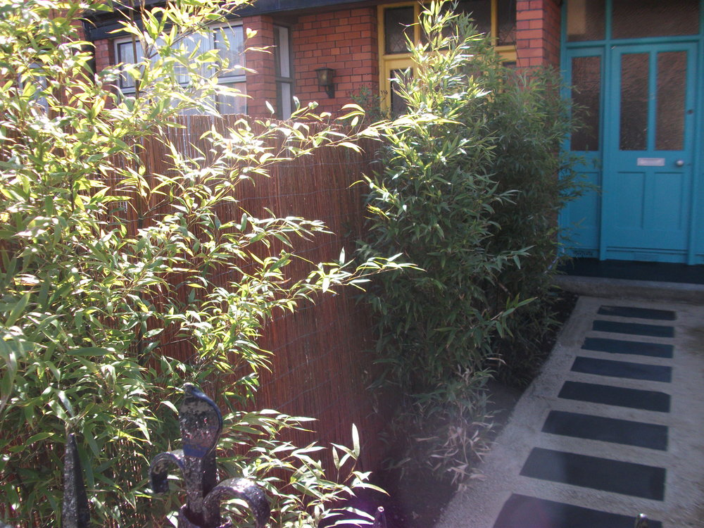 front bamboo hedging an screening.jpg