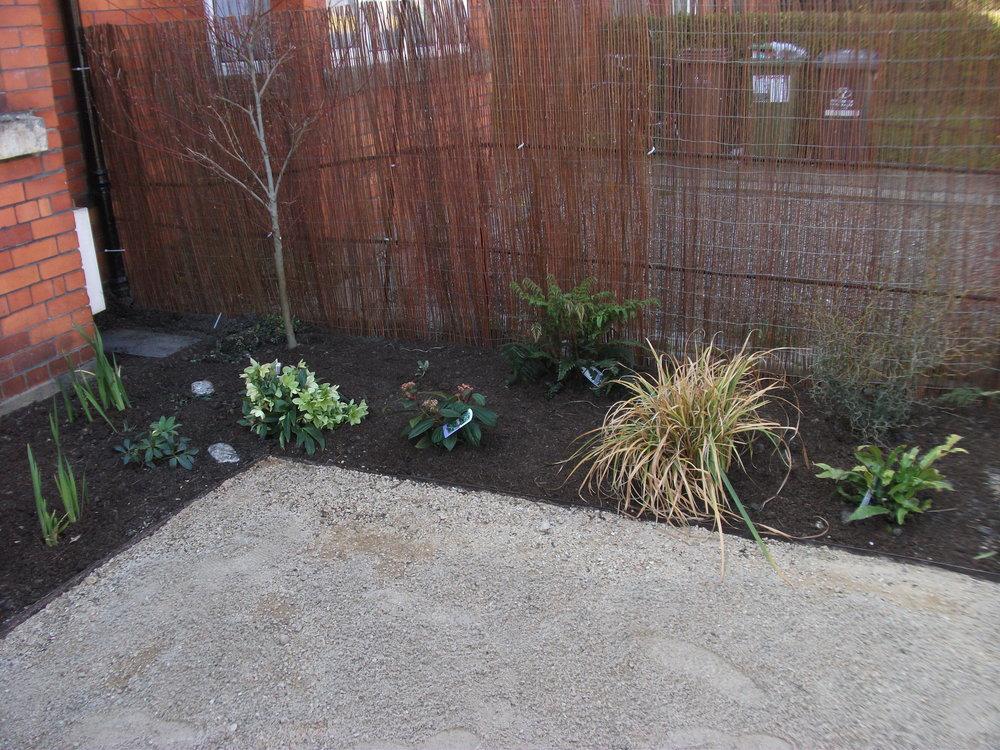 front garden planting.jpg