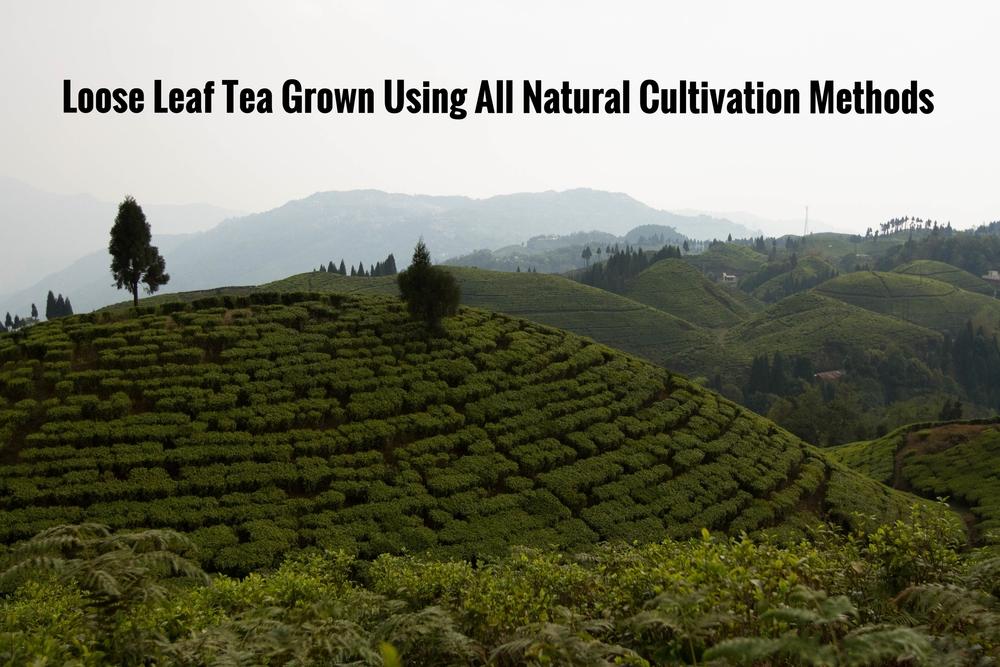 Conundrum Tea