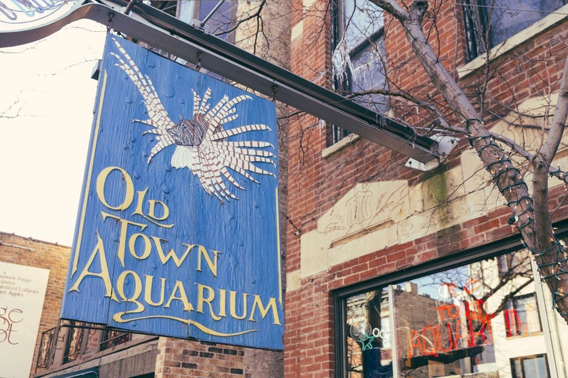 kake-best-digital-marketing-chicago-old-town-aquarium.jpg