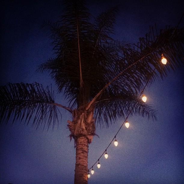 ca nights