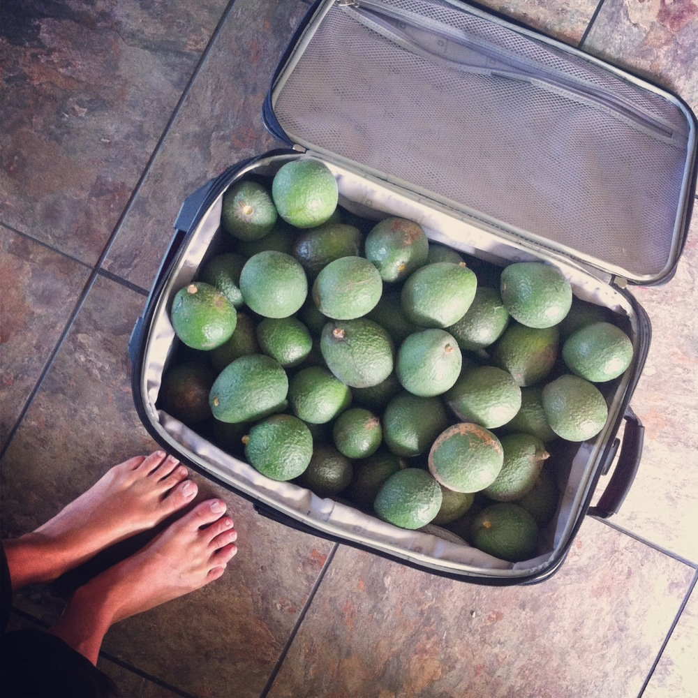a suit case full of avocado