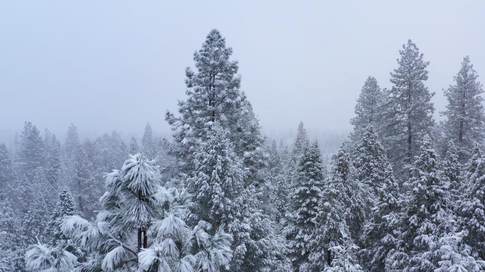 winter-snow-feb-17-2019-1.png