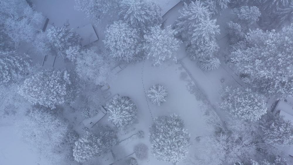 winter-snow-feb-17-2019-2.png