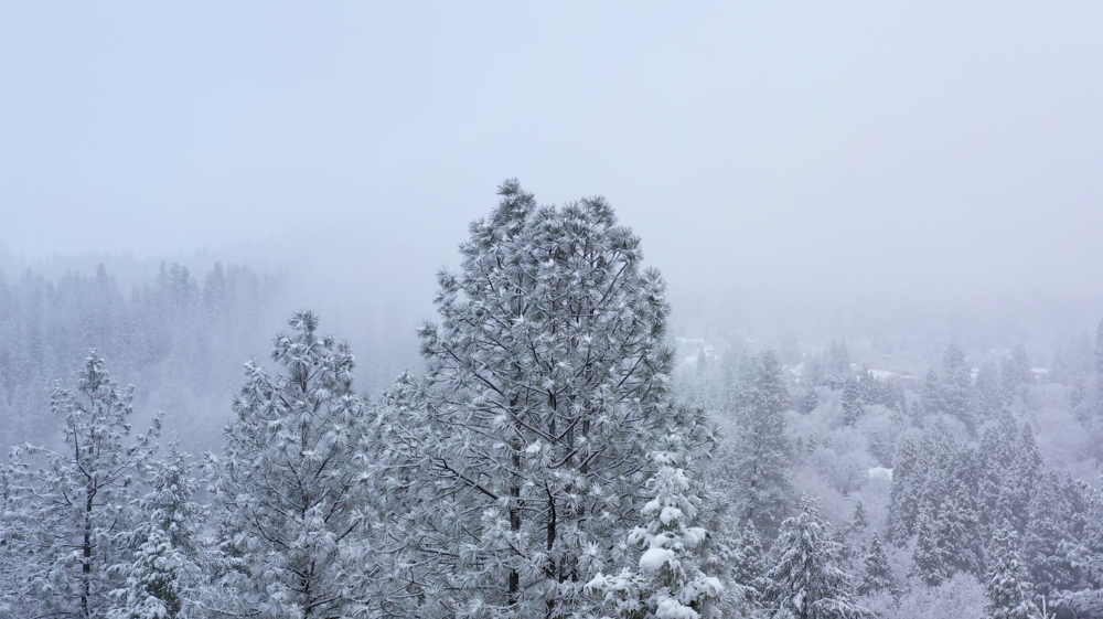 winter-snow-feb-17-2019-3.png