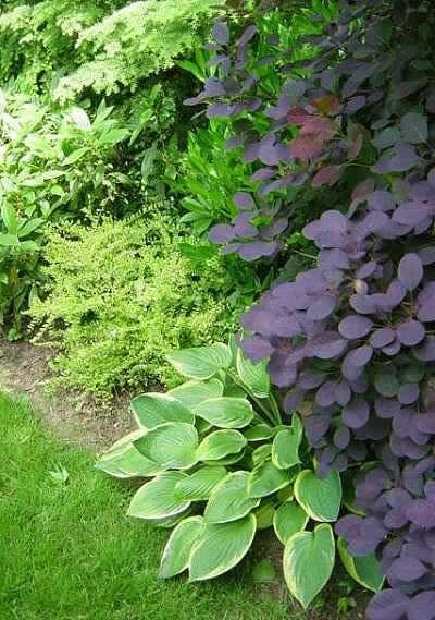 foliagecomb2.jpg