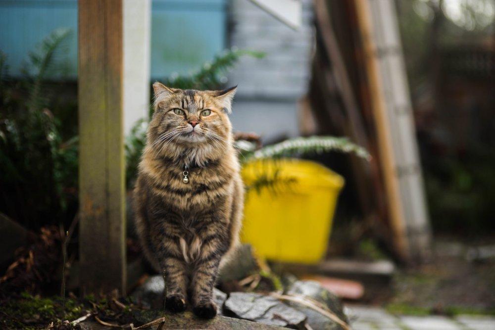 cat-mapper-max-ogden-121136.jpg