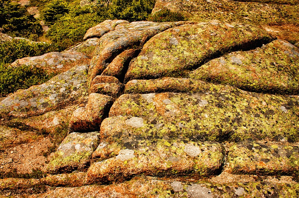 Cadillac Mountain - Textured Rocks