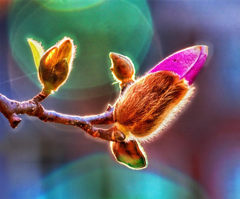 """""""Spring Blossom""""                                             Carol K. Walsh"""