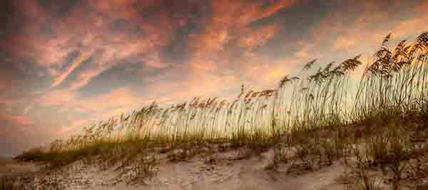 """Wild Oats at Sunset""    (Another photograph in my series of ""Beach Meditations"""