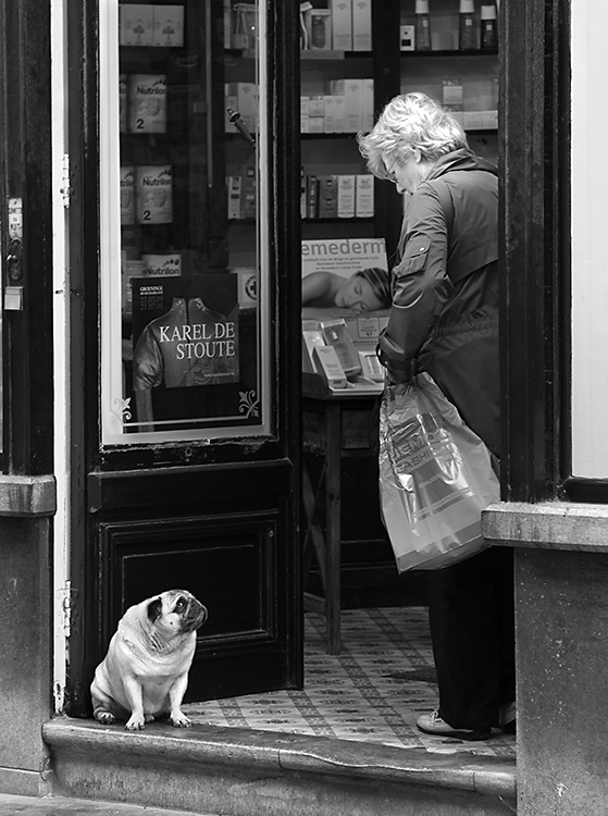 Woman and Pug on Threshold, Bruges 2009