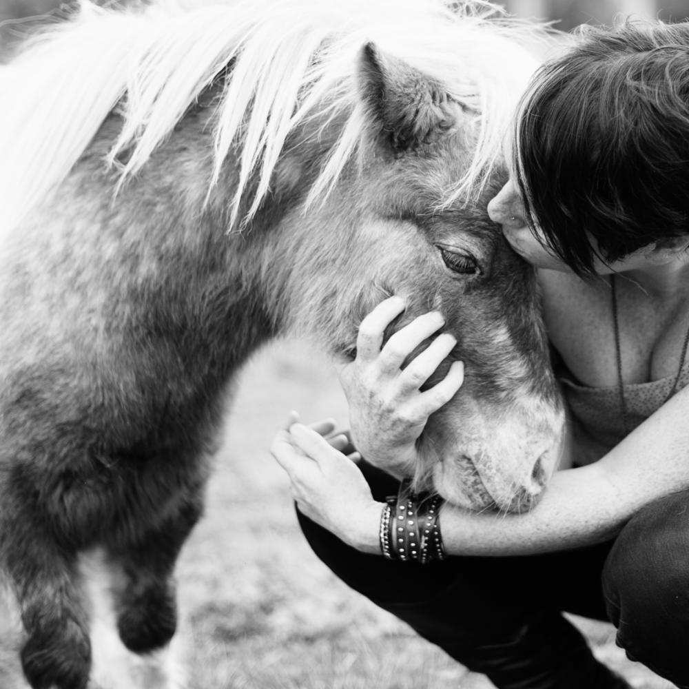 squareimage_horse.png