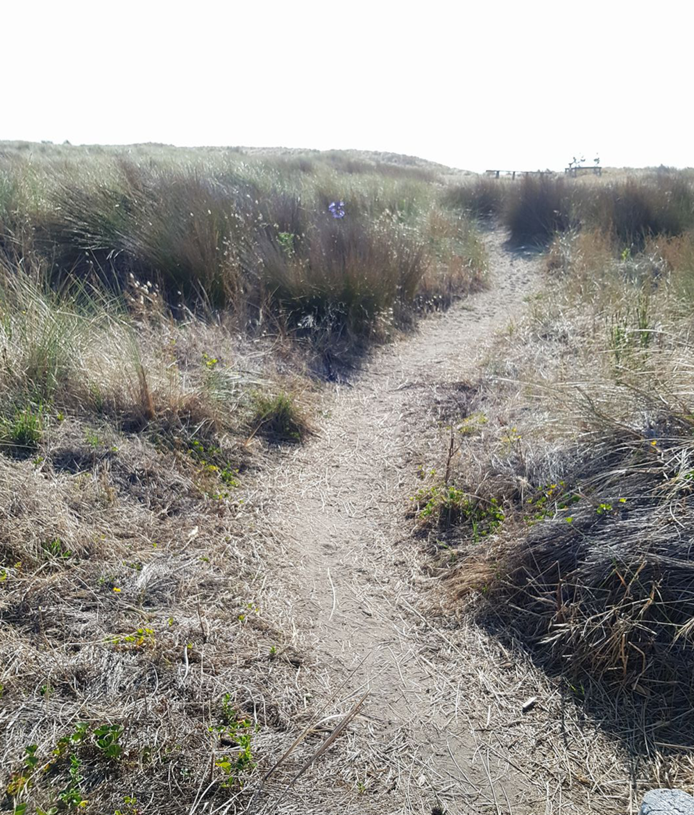 ocean-path.png