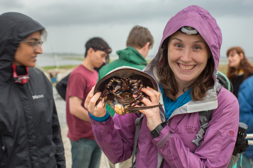 Monitoring Horseshoe Crab Breeding with the NY Audubon - May 31