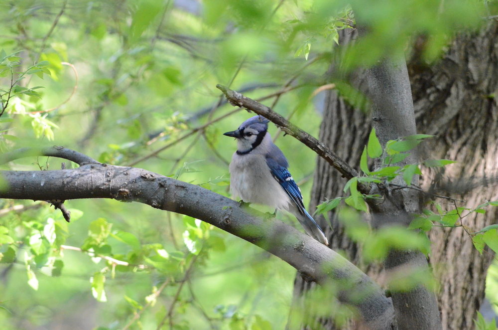 Spring Birding in Central Park with ornithologist Dr. Bert Harris - May 12