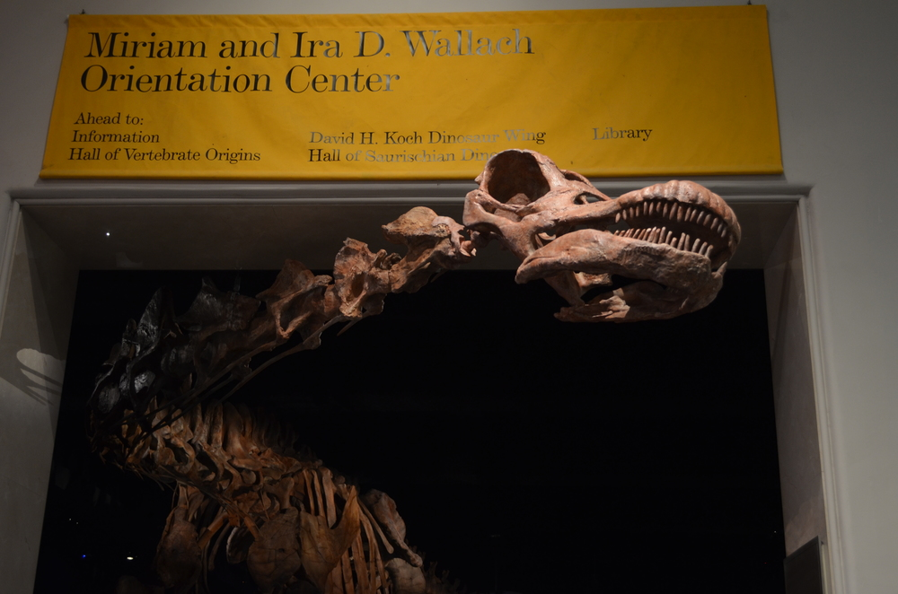 Dinosaur Hall Tour at AMNH with paleontologist Danny Barta - January 30