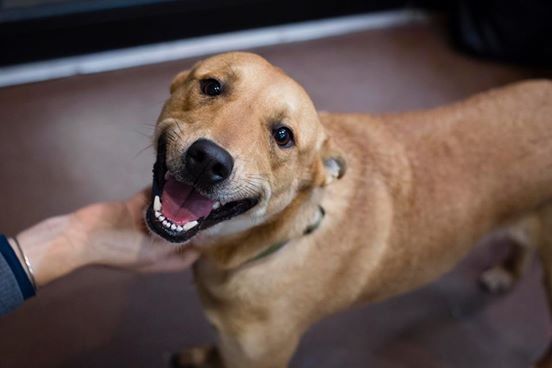 Adopt 163,333,333 dogs!  - Assuming the average adoption cost at about $600 (vet visit, microchip, neuter, food, etc), you could afford to adopt over a hundred million little guys and setting them free on some giant patch of land that you've also bought with all that money.