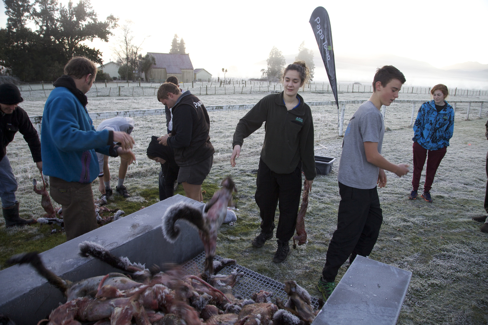 Hardy West Coast students brave freezing temperatures to dispose of possums after they have been plucked and skinned on the Project Possum short course in Harihari.