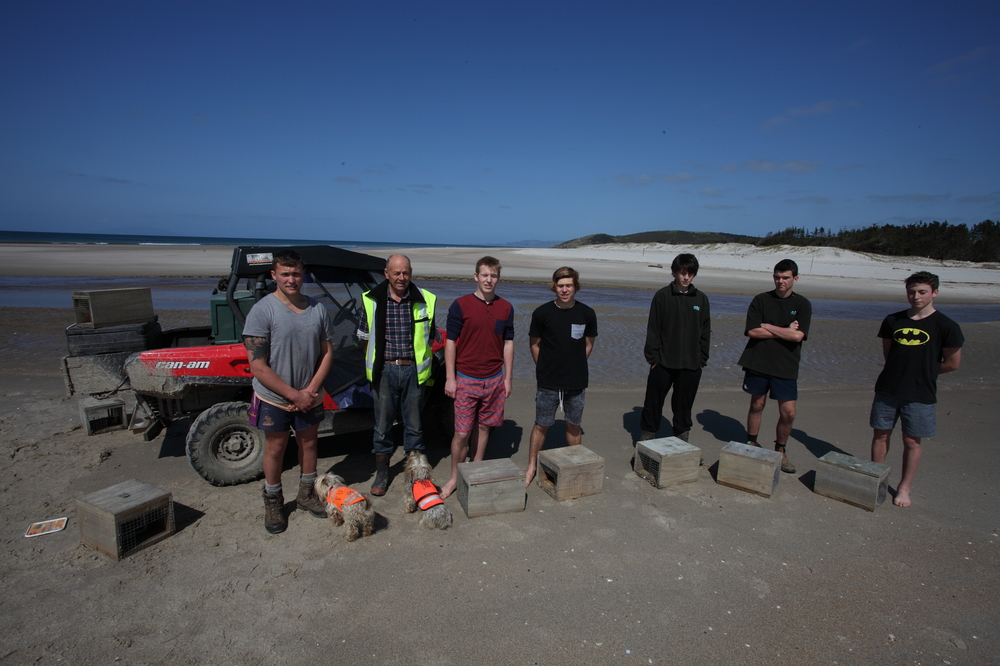Students from Rodney College and Otamatea High School placing traps at Te Arai Point with a view to protecting native coastal birds such the NZ Dotterel.
