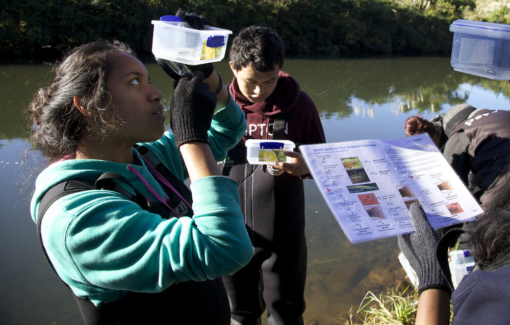 Tauira (students) from Te Kura Kaupapa Māori of Kaikohe counting the spines on the dorsal fin of native galaxids ensuring correct identification of the species of native fish they catch. In this study students are collecting, contributing and sharing data with Te Roroa and the Department of Conservation. They are measuring the impact of two new fish ladders on Te Waipoua Awa.  Students learn about biosecurity and ecology gain Unit Standard qualifications in pest control and fencing. Each student participates in a student-led sustainability project in trap building, trapping and/or waterways restoration for which they gain NCEA Achievement Standard qualifications in Biology and EfS.