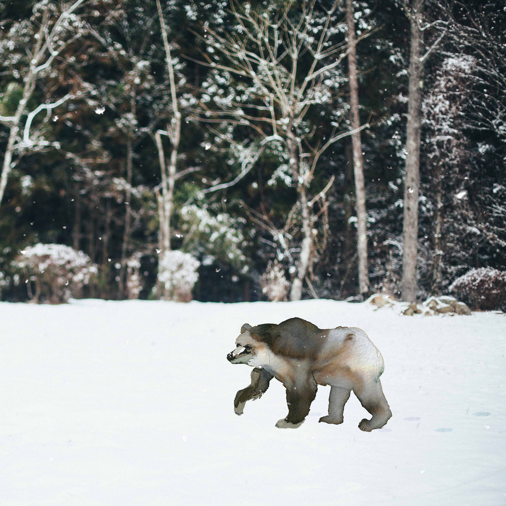Bear In the Snow.jpg