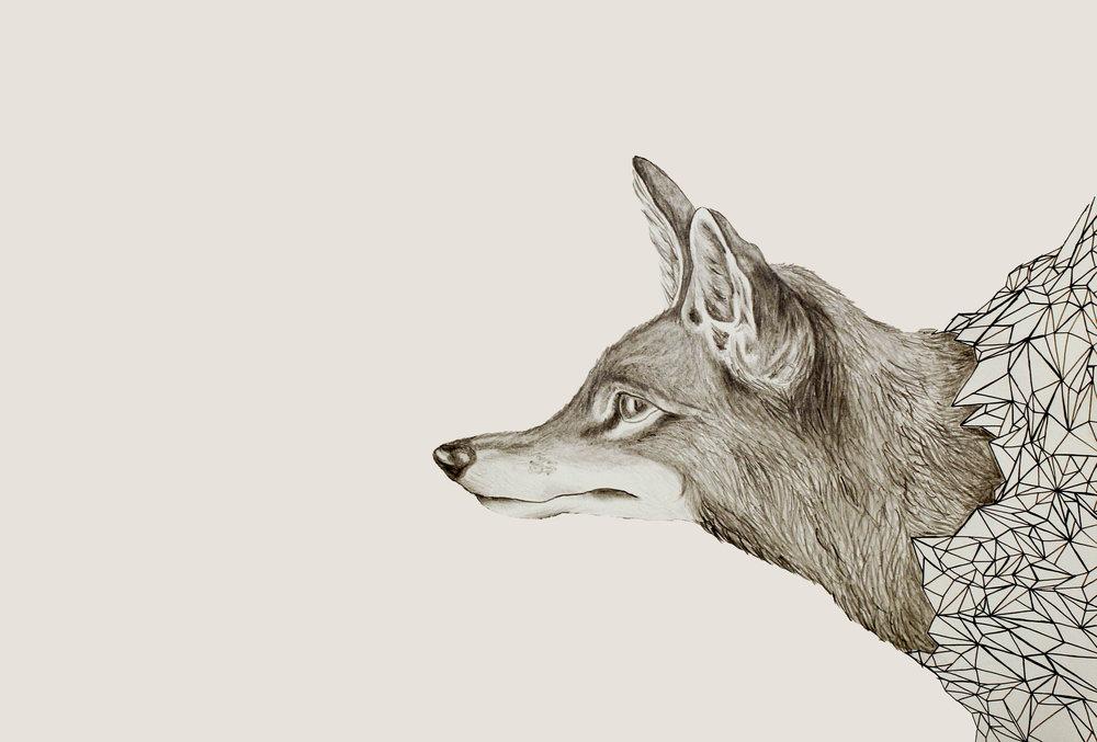 fox_bw2.jpg