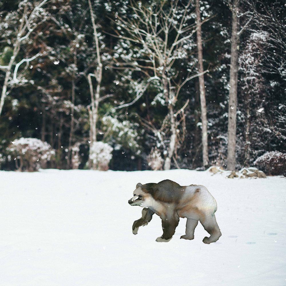 Bear+In+the+Snow.jpg