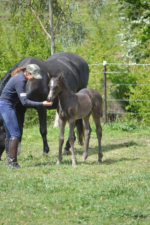 foal at Callum Park
