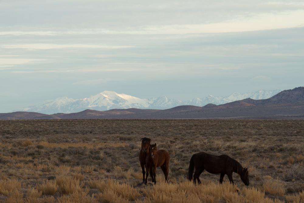 topaz mt horses-7.jpg