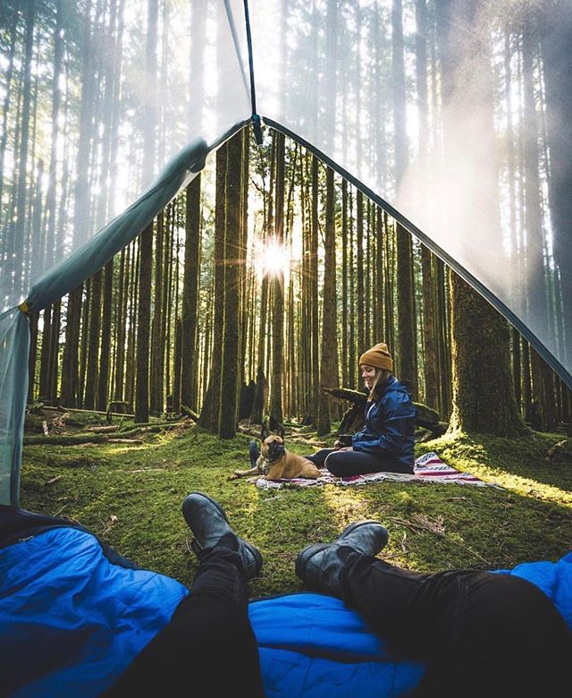 Perfect morning view in the woods 😍 { 📷 @braybraywoowoo }