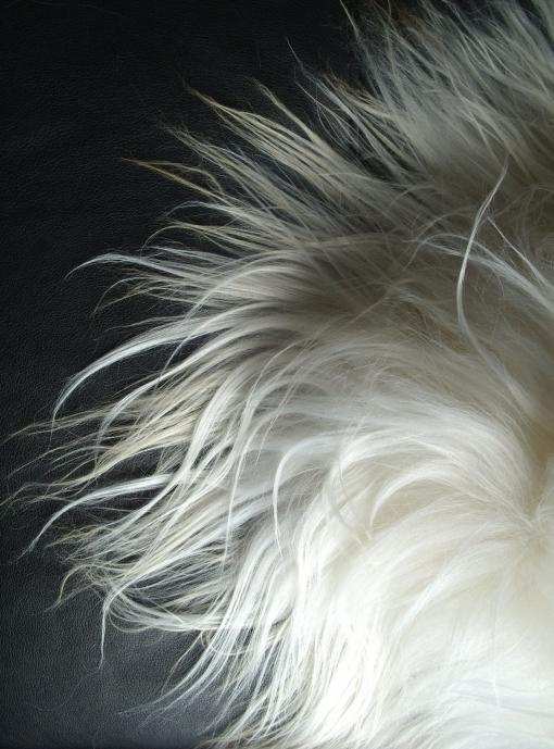 Sheepskins - Merino Sheepskins, Tibetan Lambskins, Icelandic Sheepskins, Medical Shearlings can be found here. Also our Multiple Merino Sheepskins.