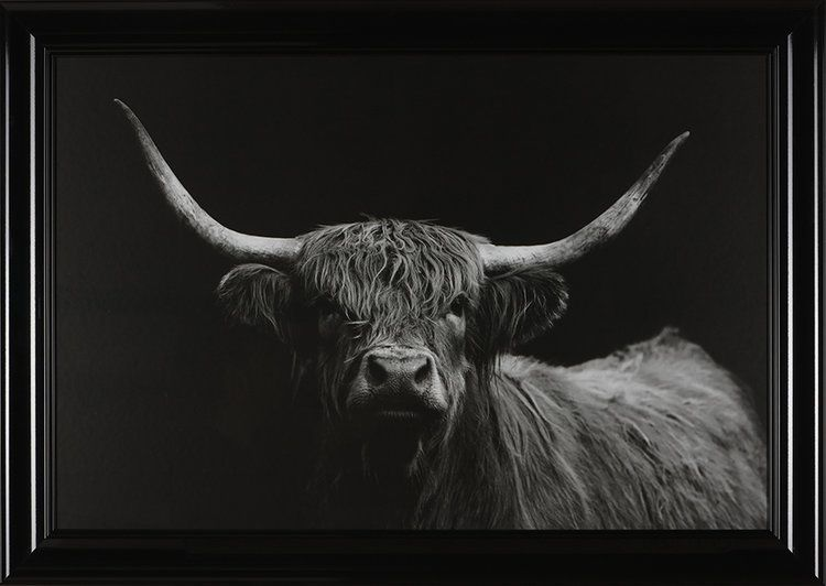 Highland Cow Art.jpg