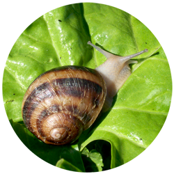 allotment-escargot.png