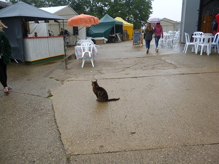 Cider Fest cat small
