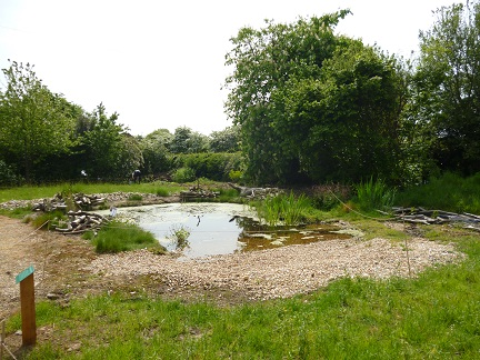 Littlebourne reserve pond May 2014