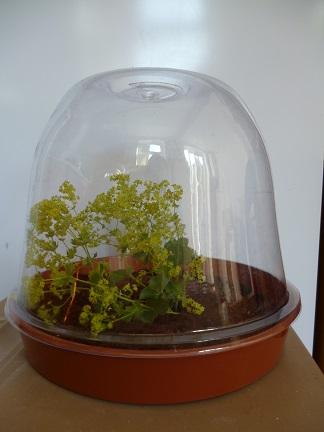 mini snail farm
