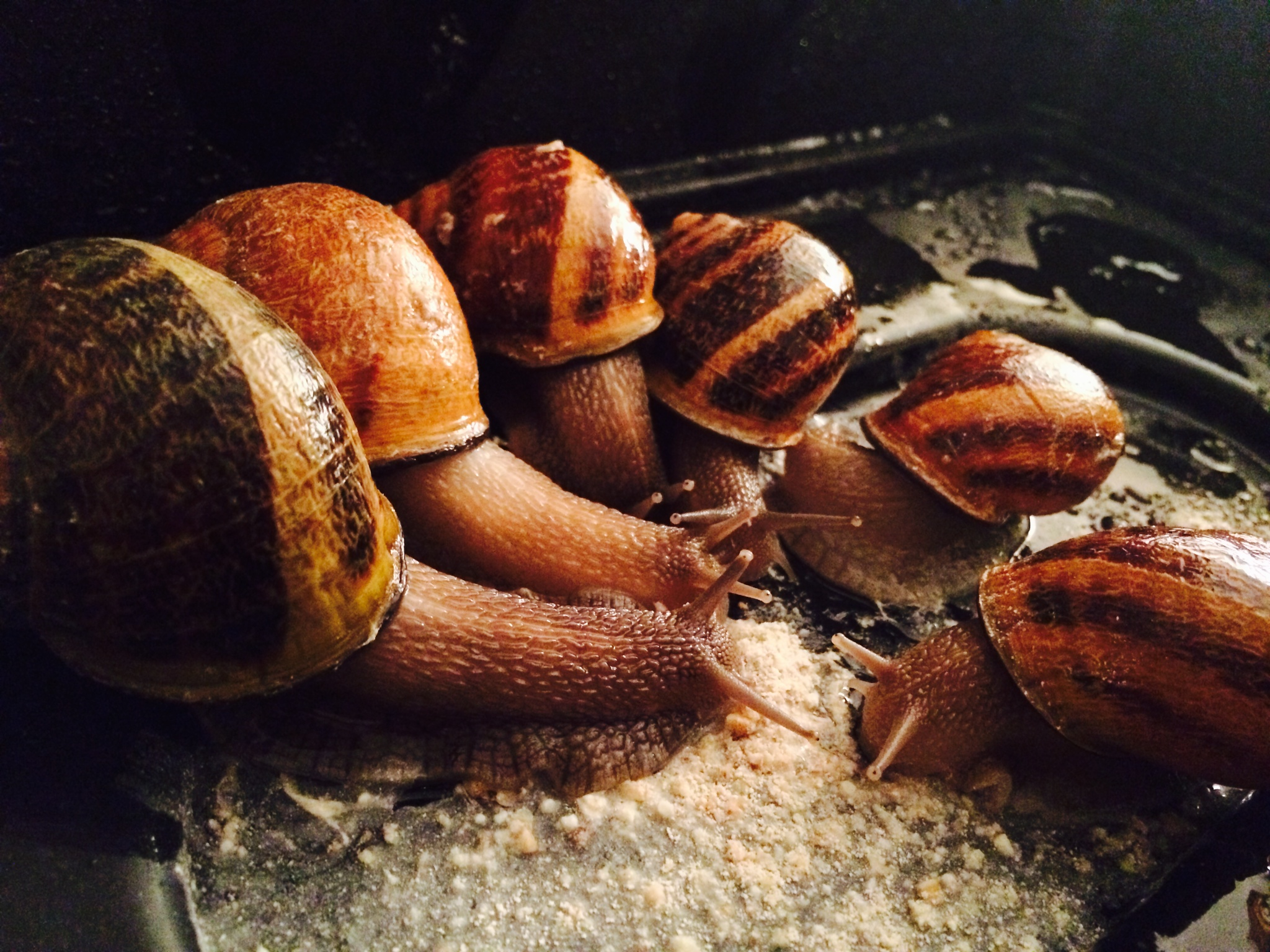 photo snails eating