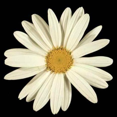 fibonacci1.jpg