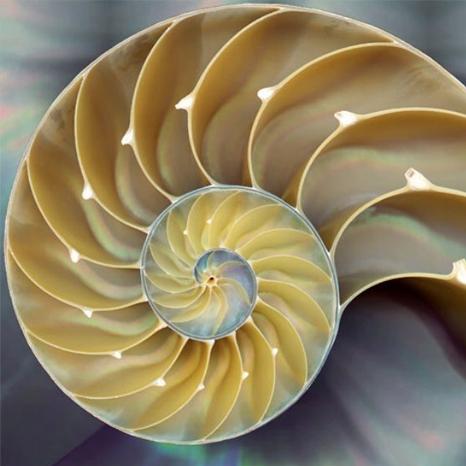 fibonacci2.jpg