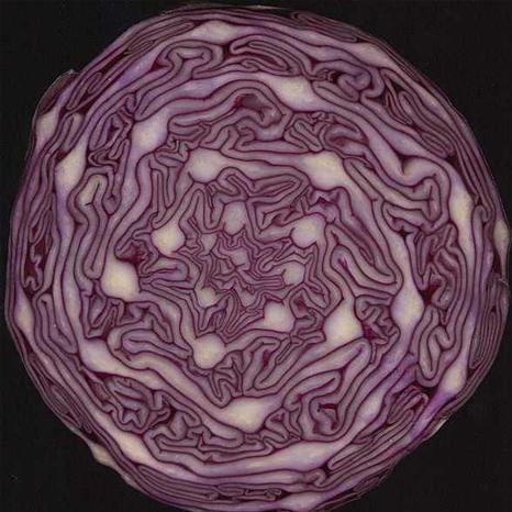 fibonacci5.jpg